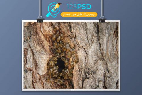 عکس زنبور کد 2821
