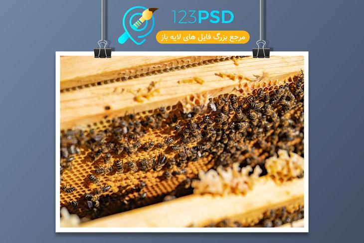 عکس زنبور کد 2848