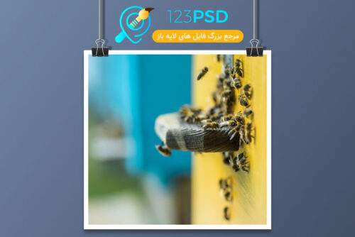 عکس با کیفیت زنبور کد 3366