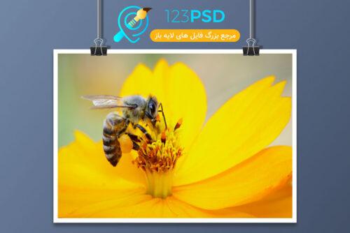 عکس با کیفیت زنبور کد 3369