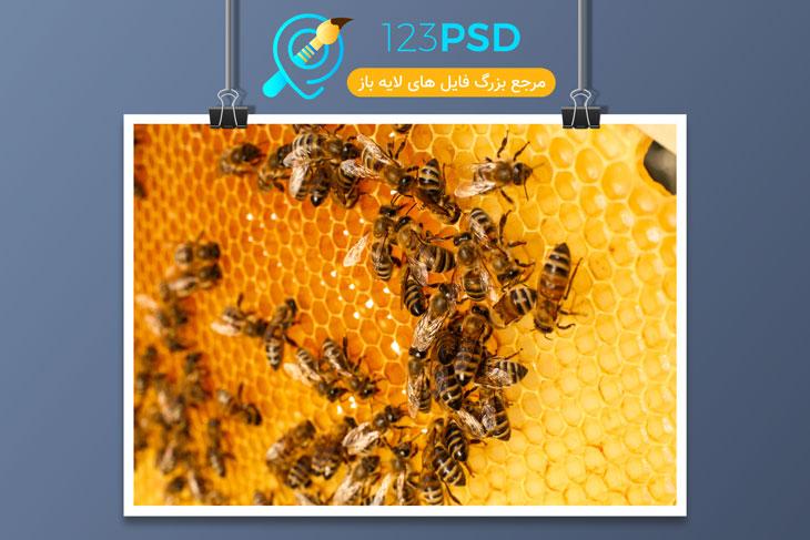عکس با کیفیت زنبور کد 3372