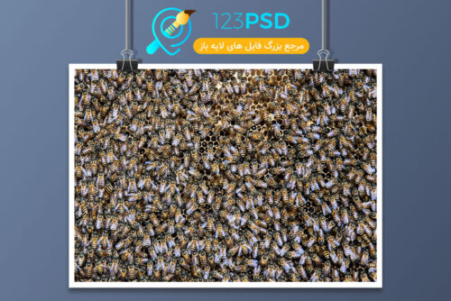عکس با کیفیت زنبور کد 3382