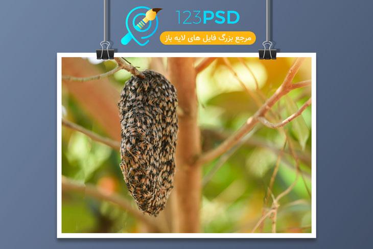 عکس با کیفیت زنبور کد 3384