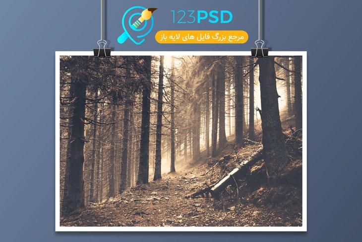 تصویر با کیفیت جنگل 2020